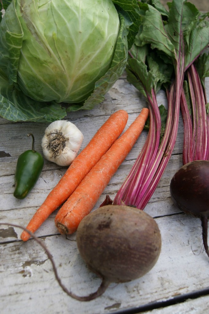 Cabbage, Carrots, Beets, Oh my!